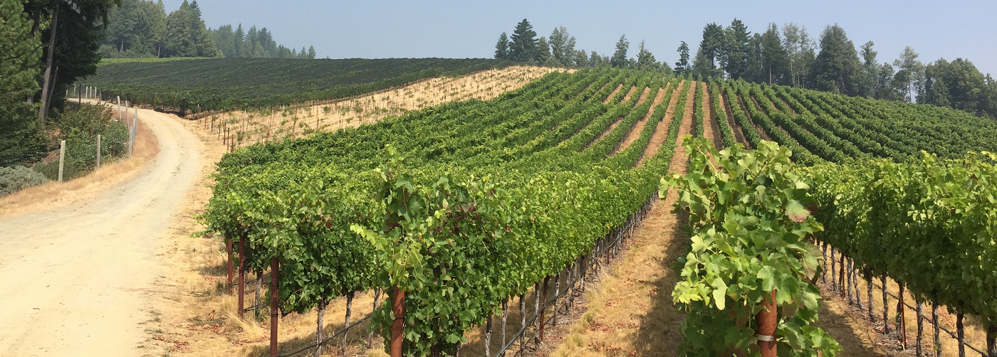 Alder Springs Vineyard