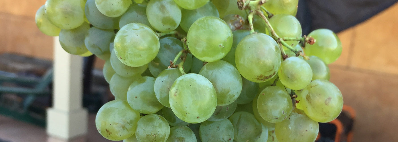 Cépages d Or (Grapes of Gold)